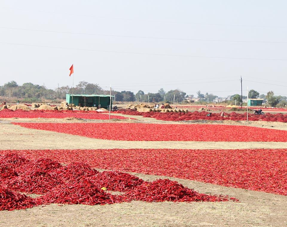 Upplev Indien - torkar chili