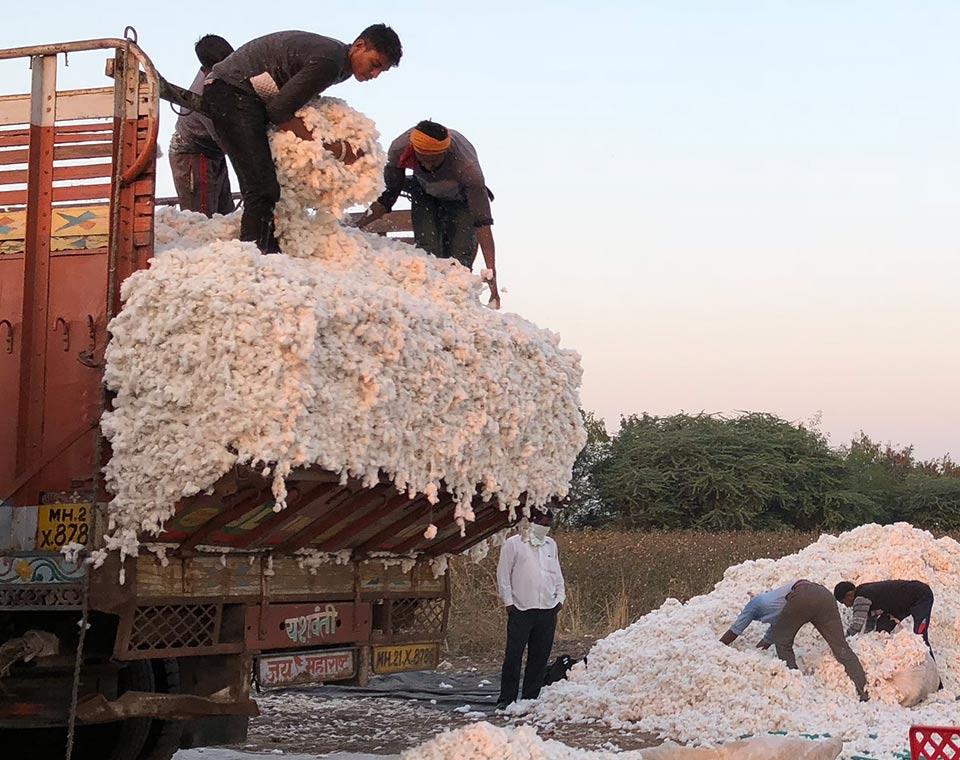 Upplev Indien- bomull