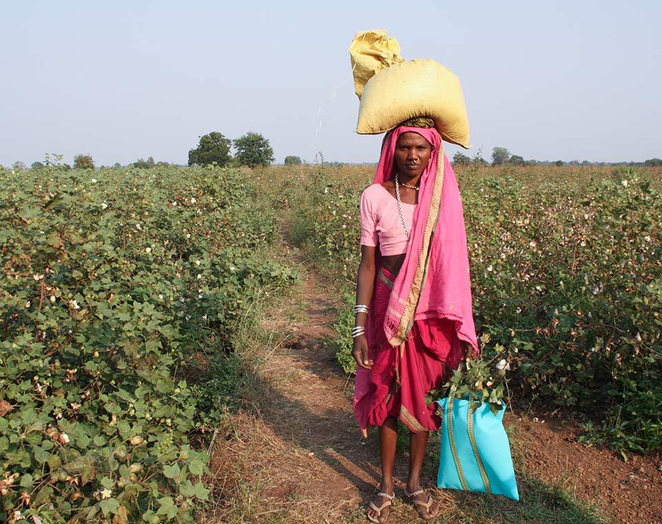 Upplev Indien - bomullsfält