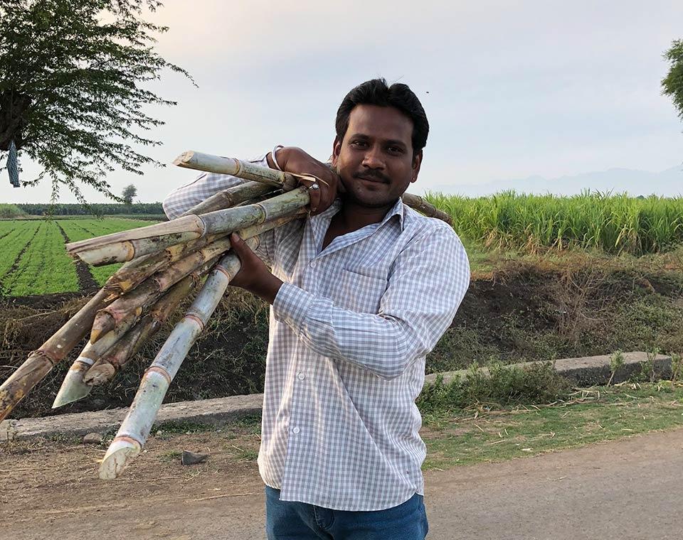 Upplev Indien - sockerrör